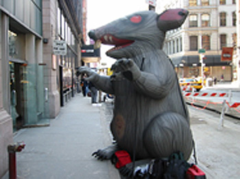 Endocrine disrupted rat on the attack!